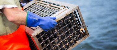 A Pesca Comercial